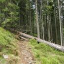 Druhá věc bylo několik polámaných stromů přes cestu. Jediné štěstí, že jsme byli nalehko, s bágly bychom se tam prodírali snad ještě dnes :-)
