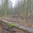 Takového dřeva, P možná litoval :-)