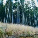 """""""To je tak hezký, ten černý les a žlutá tráva,"""" rozplývala se Šárka. Na fotce to ovšem tak nevyniklo."""