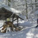 Paměť stromů - ukázka letokruhů na starém pařezu. Zde si necháváme lyže a ke Stožecké kapli musíme bez nich.
