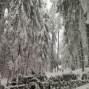 V lese jsou další spadané stromy a větve.