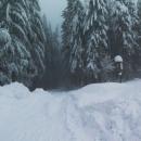 Ohlédnutí zpátky - v lese to praská, na zem padají malé laviny nebo celé větve. Strašidelné.