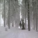 A v lese další - tahle je dost čerstvá. Uklidňuji se jedině tím, že když je špička už dole, zrovna pod tímhle stromem je tedy bezpečno.