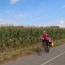 Podél kukuřice