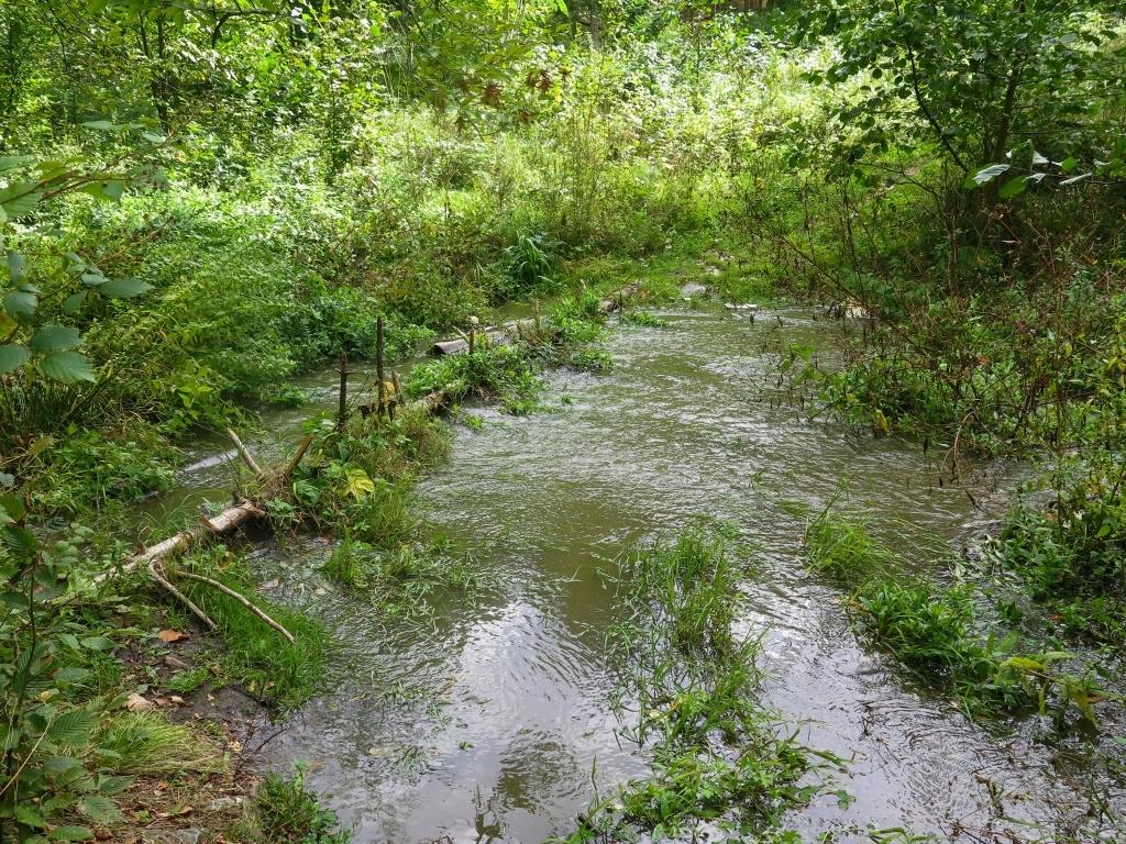 Musíme překonat potok. Včera trochu sprchlo a potok je silně rozvodněn. Jdeme v nízkých botách...