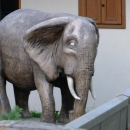 První plánovaná Olšiakova socha slona stojí bohužel za plotem. Teda, první byl drak v Ronově, ale tam jsme jaksi - rozjetí na stezce - zapomněli odbočit :-) Nevadí, ještě na něj dojde.