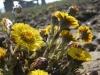 Jaro se dere na svět