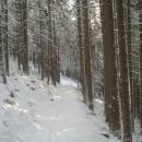 Cesta do Maršova.