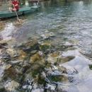 Na břehu Skadarského jezera