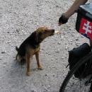 Kousek nás doprovázel nějaký zatoulaný pes