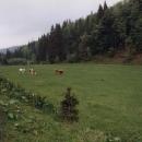 Opuštěná vesnice Golijanská řeka. Fotbal tu hrají krávy. Hnědí proti bílým, rozhodčí je hnědobílý :-)