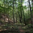 Kráčíme klidem bukových lesů