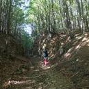 Nabyl jsem dojmu, že v lesích tu vedla kdysi nějaká lesní železnice