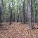 V noci jsou husté bukové lesy pěkně strašidelné