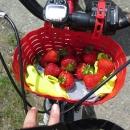 Pojďte na jahody!