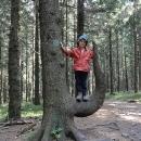 Zajímavý strom na rozcestí Ropice s Víťou