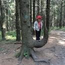 Zajímavý strom na rozcestí Ropice se Šárkou