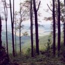 Bukový prales na Velké Javořině