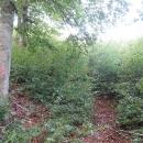 Pěšina není vůbec vyšlapaná, vlese narostlo mlází, kterým se musíme prodírat.