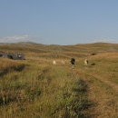 Ocitáme se na zvlněné planině – a kolem jsou jenom kopce a pastviny; společnost nám dělají osamocené kravky. Míjíme několik salaší.