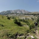 Uzounká pěšinka vyšlapaná sběrači borůvek nás vede pohodlně podél potůčku na náhorní planinu.