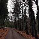 Cesta směrem na sedlo, kterou známe zejména z běžek (okruh kolem Bukové hory)