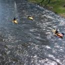 Kanoe na Orlici - už je opravdu jaro!