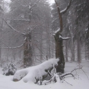 Zátiší ponurého Českého lesa