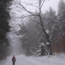 Ponurým lesem pokračujeme v cestě a pomalu obracíme zpět