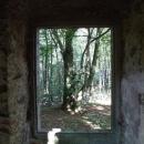 Buk zarámovaný v okně rozpadajícího se kostela