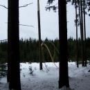 I v Českém Lese tuhá zima napáchala hodně škod