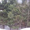 Za mohutného sněžení (mělo pršet) konečně nazouvámě běžky