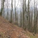 Prudký výstup bukovým lesem po žluté