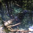 Zkamenělé stromy pod vodou