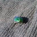A další zástupce hmyzu, který mě obletoval