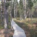 Chodníčky v rašeliništích