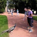 Markétu a Luďka zajímá místní hladová a na mňamky od turistů naučená zvířena
