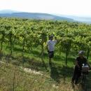 Cyklostezka vinicemi nás zavedla k bílému vínu. Nakonec se ukázalo, že to nebyla cyklostezka, protože jsme zabloudili :-)