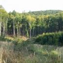 Typické Chřibské lesy