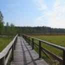 Projížďka podzimním rašeliništěm