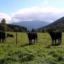 Na ten kopec za těmi kravami jedeme