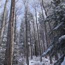 Ve vyšších partiích hor už začínají být ojíněné stromy