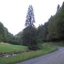 Schwarzwald. Vjíždíme do lesů a aut rapidně ubylo.