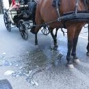 I koně mají své potřeby