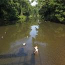 Šárka žabička, už je zase ve vodě (řeka Morava)