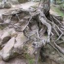 Stromy to tu nemají lehké