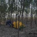Nocleh v lesíku