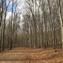 Bukový les je úžasný!
