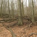 Stejně jako si Pavel pokaždé vzpomene na Markétu na rozhledně, tak my si vzpomeneme na Pavla, když se někde v lese válí zbytečně dřevo. A že ho tady bylo!