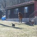 Bylo tady spousta volných domácích zvířátek :-)